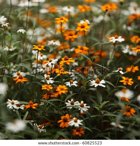 Close up of  beautiful flowers - stock photo
