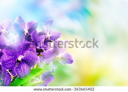 Close up of beautiful plant orchid flower - stock photo