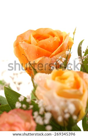 Close-up of beautiful yellow rose, a studio photo