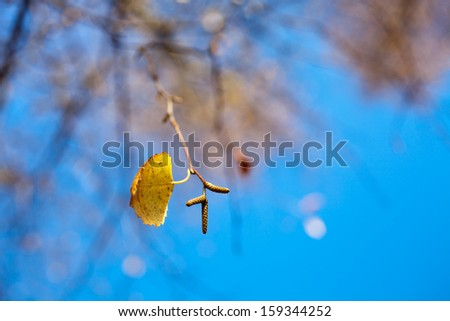 Close up of  birch leaves against blue sky - stock photo