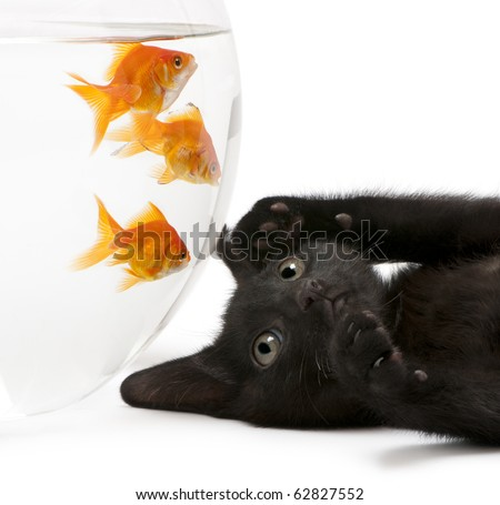 how to set up a goldfish bowls