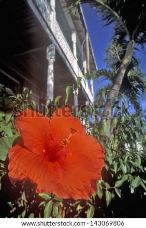 Close-up of blooming Hibiscus flower at the garden of the Ernest Hemingway Home and Museum, Key West, Florida - stock photo