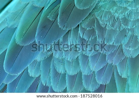 close up of blue and yellow macaw wing feathers - stock photo