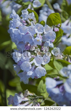 Close up of bouquet of tiny blue flowers - stock photo