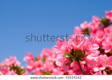 Close up of bright pink azalea flower and blue sky - stock photo