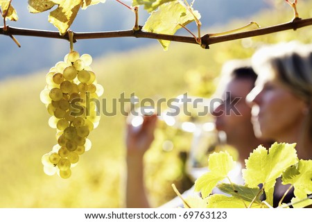 Close-up of bunch of green grapes hanging from vine in vineyard with blurred woman and man (couple) in background holding glasses for wine tasting. - stock photo