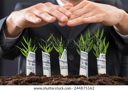 Close-up Of Businessman Protecting Sapling Covered With American Dollars - stock photo