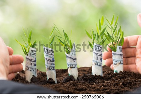 Close-up Of Businessman's Hand Protecting Sapling Covered With American Dollars - stock photo