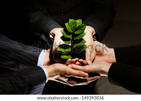 Close up of businessmen hands with sprout in palms - stock photo