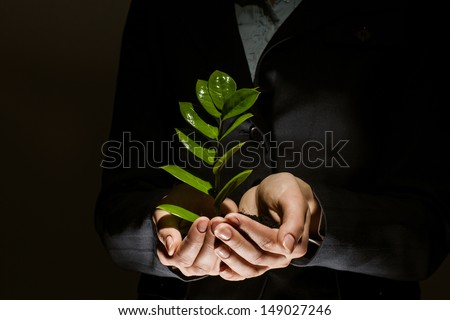 Close up of businesswoman hands with sprout in palms