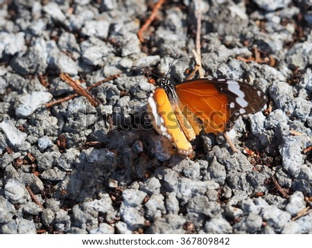 Close Up Of Butterfly On Ground