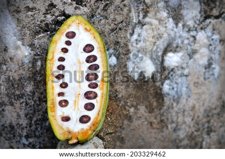 Close up of cacao fruits, selective focus.  - stock photo