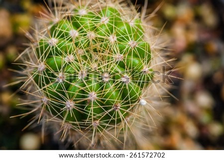 Close up of cactus texture background,  - stock photo