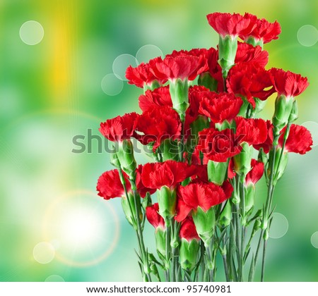 Close up of carnation - stock photo