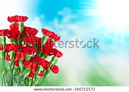 Close up of carnation flower - stock photo