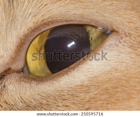 Close up of cat eye - stock photo