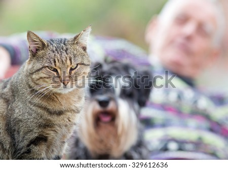 Close up of cat looking at camera and its owner and doggy friend in background on the bench in park - stock photo