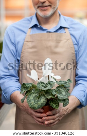 Close up of cheerful old gardener standing and holding plant in his arms. The man is smiling - stock photo