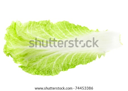 Close up of chenese cabbage fresh leaf - stock photo