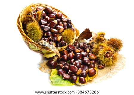 close up of chestnuts isolated on white background  - stock photo