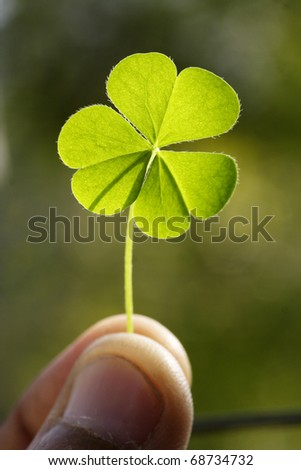 Close up of clover leaf - stock photo