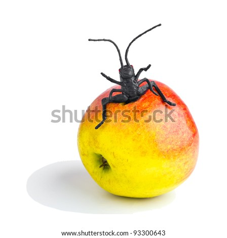Close up of cockroach climb out from apple. isolated on white - stock photo