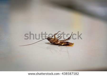 Close up of cockroach lying on stone ground. - stock photo