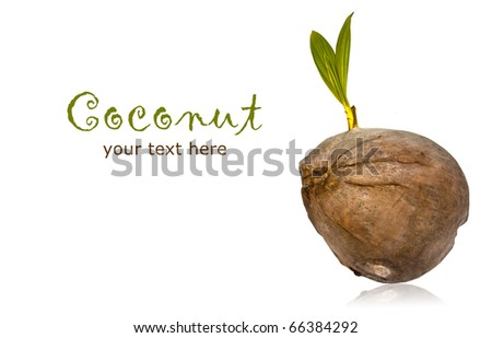 Close up of coconut with leaves on a white background with copy space. - stock photo