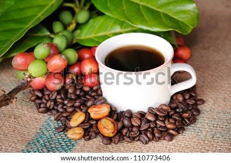 Close up of coffee and fresh raw coffee beans with leaf on texture background, selective focus. - stock photo