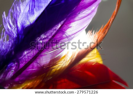 Close-up of colorful feather with light on background. - stock photo