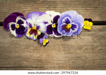 Close-up of colorful heartease flowers on an old cracked wooden table background. Concept of congratulations, Copyspace for your text. - stock photo