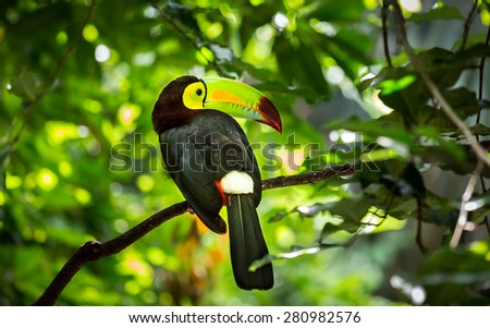 Close up of colorful keel-billed toucan bird - stock photo
