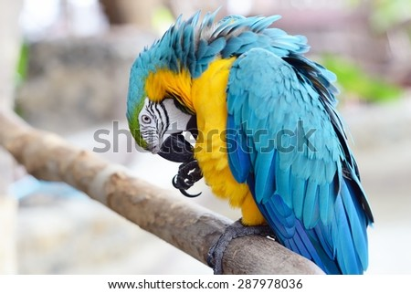 Close up of colorful macaw parrot / Macaw parrot - stock photo