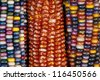 Close up of colorful ornamental Indian maize (corn) in Autumn. - stock photo