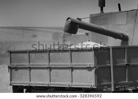 Close up of corn grains falling from combine harvester drum into trailer of tractor in the field - stock photo