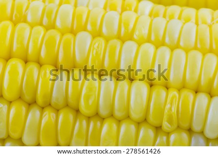 Close-up of Corn seeds texture agriculture background - stock photo