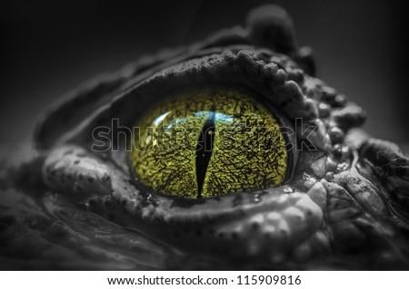 Close-up of Crocodile's Eye - stock photo