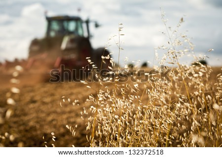Close-up of crop with Tractor ploughing field in the background