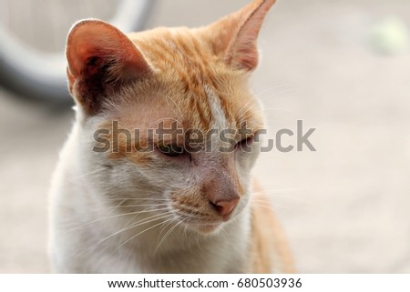 Close Up Of Cute Sleepy Brown and White Cat sits on the floor with blur background