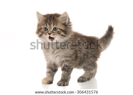 Close up of cute tabby kitten standing on white background isolated - stock photo