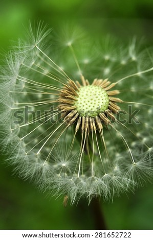 Close-up of dandelion seed - stock photo