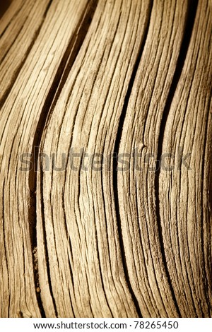 close up of dead tree trunk - stock photo