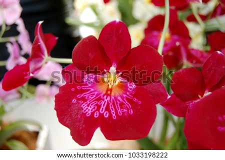 Close up of detailed beautiful red orchids