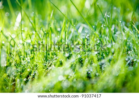 Close up  of dew drops on blades of grass in bright morning sunlight