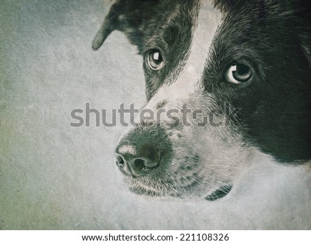 Close-up of dog in front on grunge background
