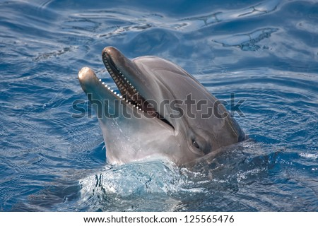 Close-up of dolphin - stock photo