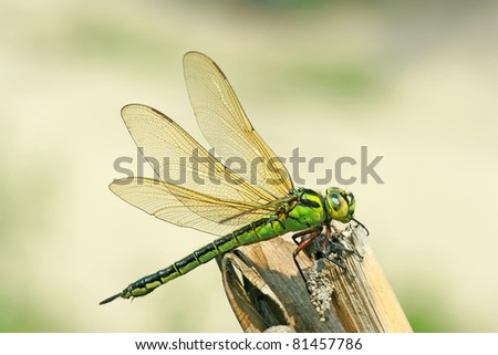 close up of dragonfly, take photos in the natural wild state, China.