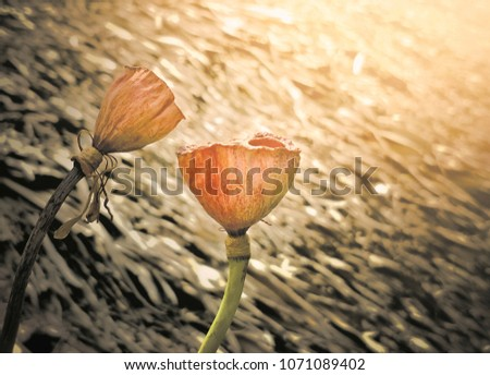 Close dried lotus flowers withered blur stock photo royalty free close up of dried lotus flowers withered and blur thatched roof with flare light in background mightylinksfo