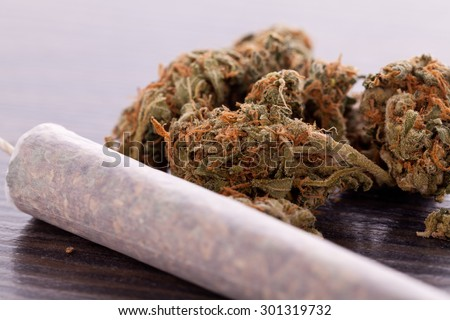 Close up of dried marijuana leaves and tied end of marijuana joint with translucent rolling paper on white background - stock photo