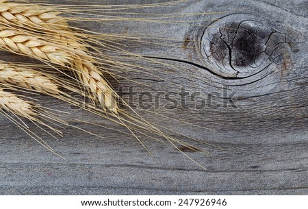 Close up of dry wheat stalks on rustic wood - stock photo